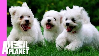 Welcome to Pupwatch thumbnail