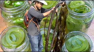 THE NEXT BIG SUSTAINABLE FOOD TREND | Must Try Kelp Pickles