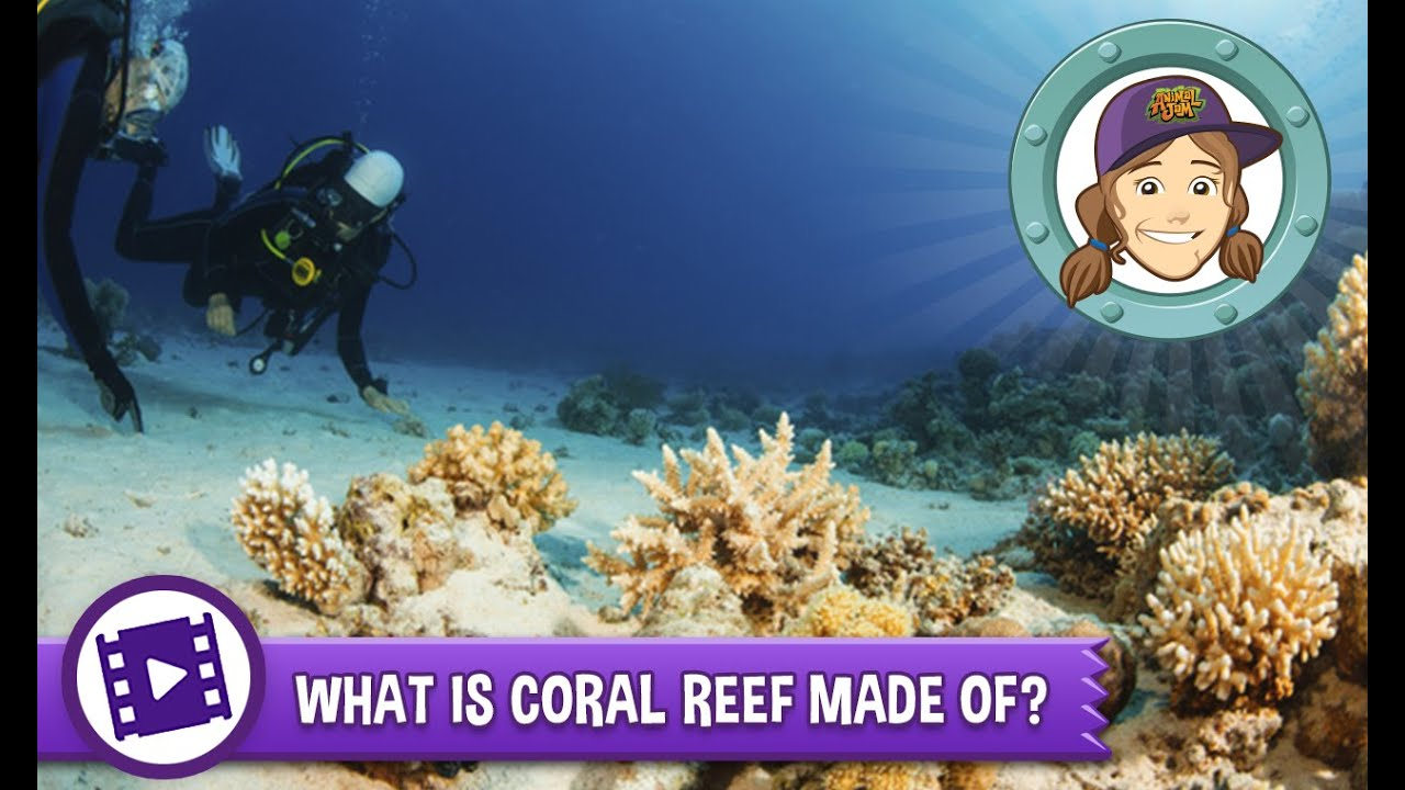 What is a reef
