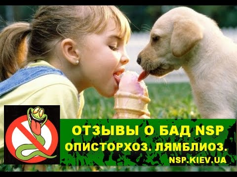 NSP официальный сайт