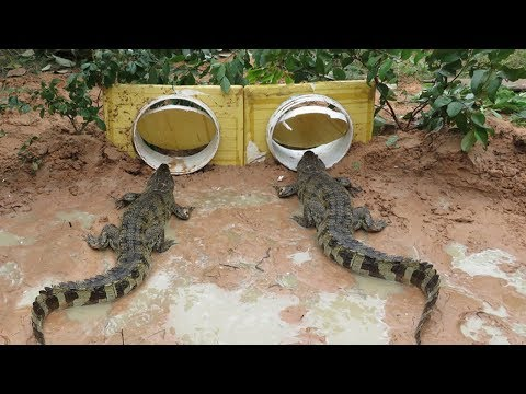 Creative Boy Makes Crocodile Trap Using Buckets - Amazing crocodile Trap in Deep Hole Work 100%