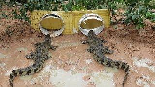 Creative Boy Makes Crocodile Trap Using Buckets - Amazing crocodile Trap in Deep Hole Work 100%