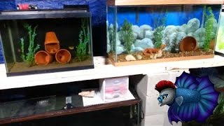 Led Lighting Update In The Fish Room Plus Tank Updates