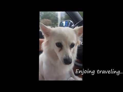 German Spitz: Traveling to Lefkada, Greece
