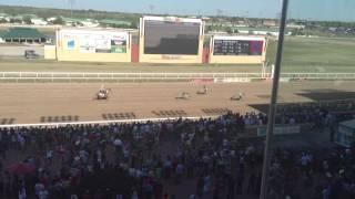 Remington Park zebras racing