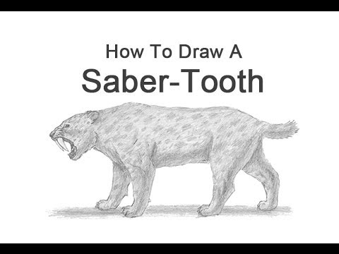 How to Draw a Smilodon (Saber-Tooth)