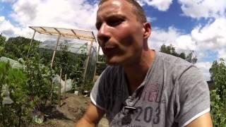 Gartenrundgang Mitte Juli 2015