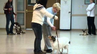 Dog Obedience School Graduation Of Beginner