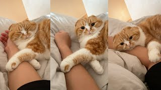 べったりまるお。手を離してくれません。#Shorts