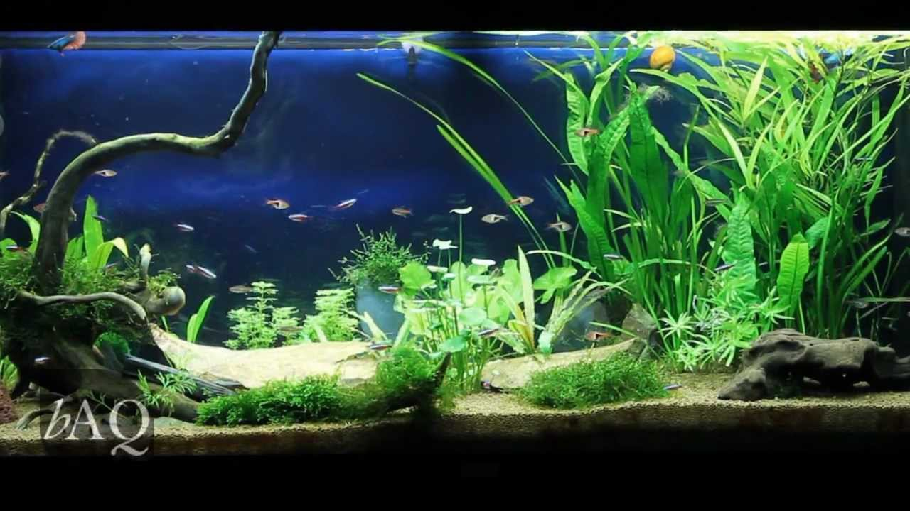 juwel rio 240 planted community tank hd youtube. Black Bedroom Furniture Sets. Home Design Ideas