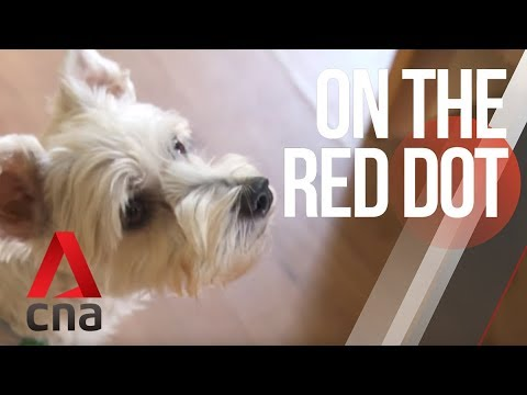 CNA   On The Red Dot   S8 E29: Our lives with dogs - Heading to the championships