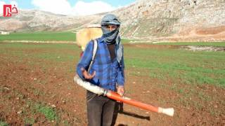 انتشار آفة الجراد في جبل شحشبو ريف حماة الغربي