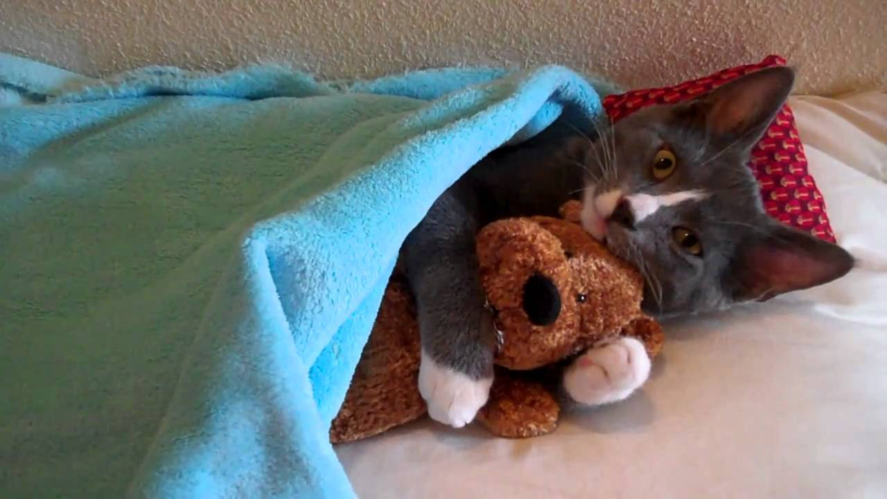 Cute Kitten Hugs His Teddy Bear (with Music) - YouTube