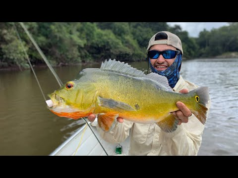 Fly Fishing Peacock Bass in Guyana (poppers)