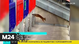 Фото Во время матча ЦСКА – \