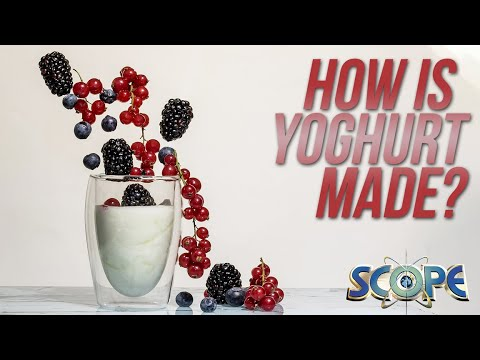 How Is Yoghurt Made?