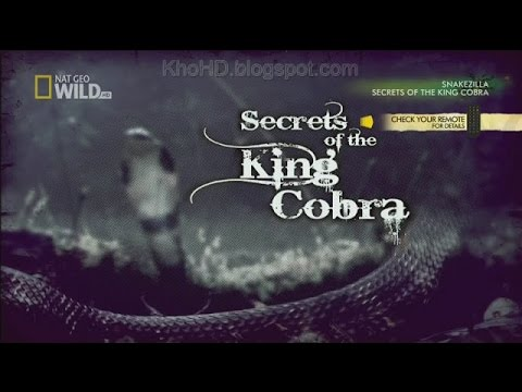 Animal Documentary 2015| Secrets of the King Cobra| National Geographic
