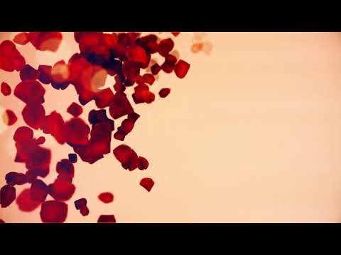 ROMANTIC ROSE PETALS WITH BRIGHT BACKGROUND, WEDDING LOVE ROMANTIC ANIMATION BACKGROUND