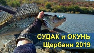 Рыбалка на судака и окуня. Щербани, осень 2019