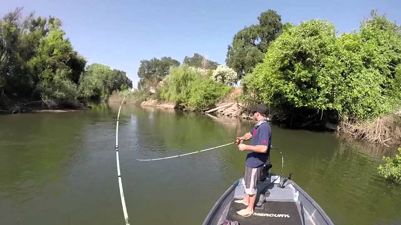 Stanislaus river striper fishing youtube for California out of state fishing license