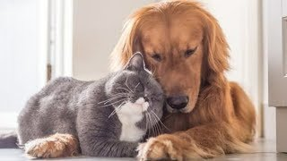 Funniest Dogs and Cats moment ever | Cute cat and dogs video