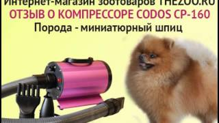 Отзыв Алла Тарасова Codos CP 160 шпицы(http://thezoo.ru/, 2014-01-30T09:21:38.000Z)