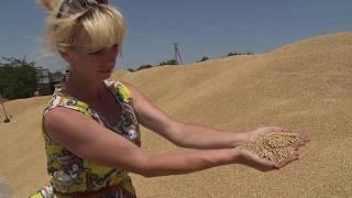 В КФУ начался сбор урожая – 3 июля 2017 г.