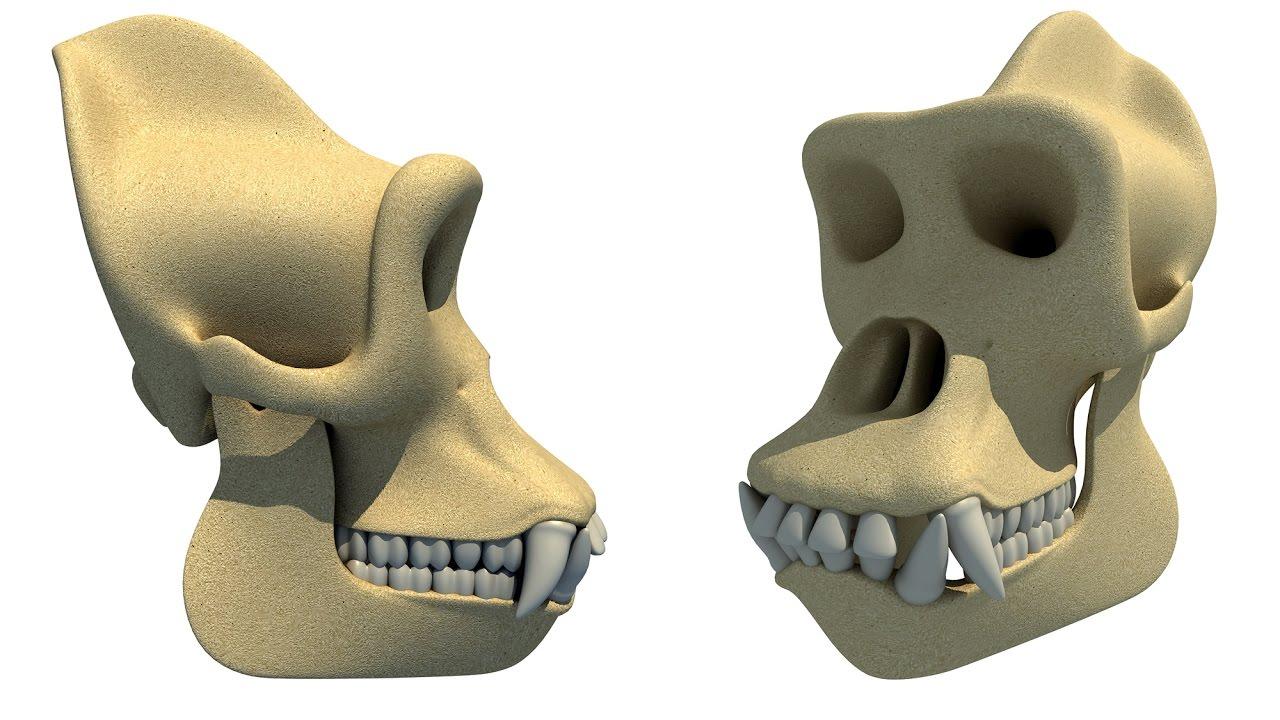 King kong Gorilla Skull 3D Model - YouTube
