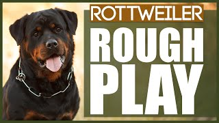 How To Stop Your ROTTWEILER PLAYING ROUGH