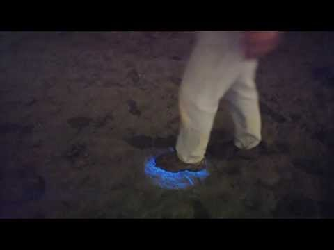 Alien Footsteps On Beach In San Diego, Bioluminescence (Red Tide) Makes Avatar Footsteps