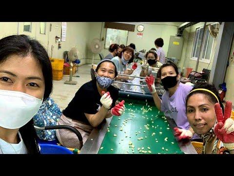 Công việc làm nông sản,lựa tỏi trong nhà xưởng ở Hàn Quốc có thú vị?