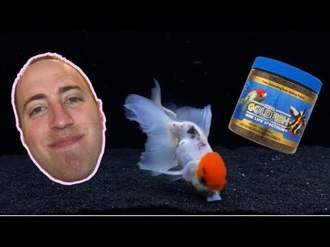 Feeding My Goldfish New Life Spectrum