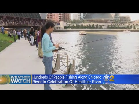 Chicago River Celebrates Healthier River System With Catch and Release Fishing