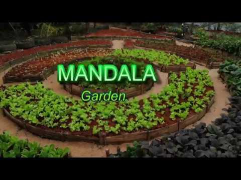 V21 How To Make Basic Mandala Garden Time Lapse In Philippines