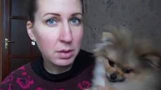Текут глаза у щенка шпица?