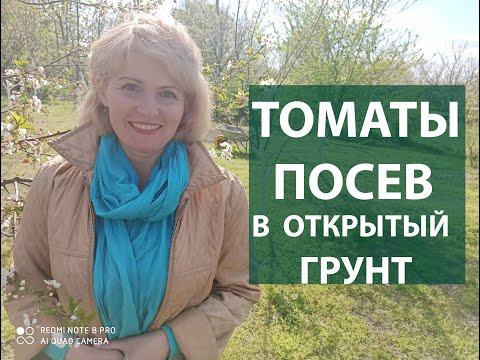 .Как сажать помидоры. Как сеять помидоры в открытый грунт. Посев томатов сразу в грунт