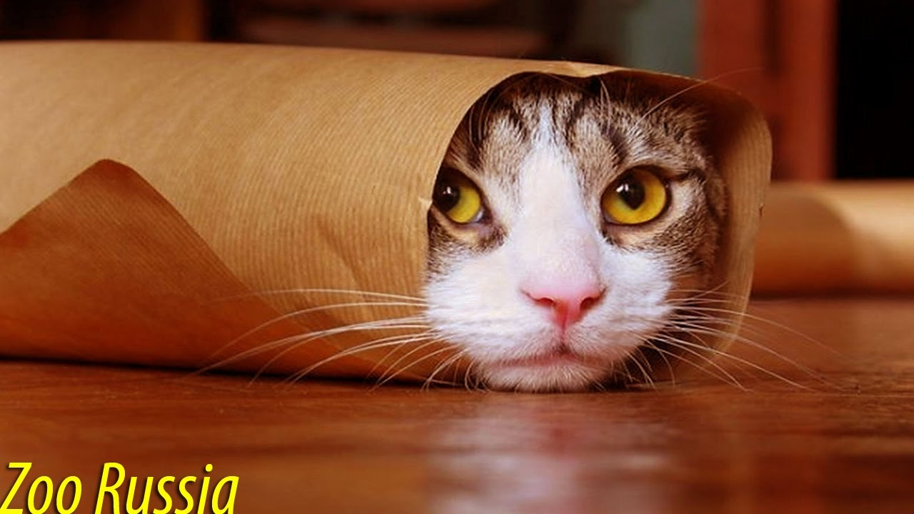 Funny Cat Hiding Videos - YouTube