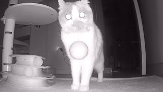 Through home-camera, I watched my cat who is alone at home and... ㅣ What's Separation Anxiety?