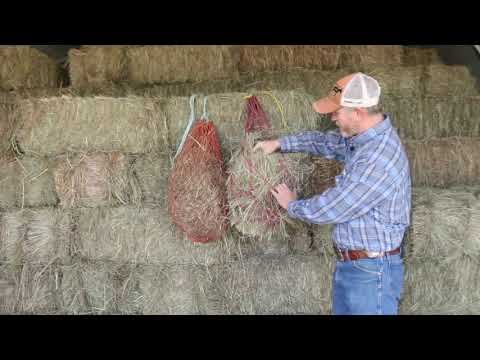 When To Use Hay Nets