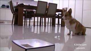 Best interactive pet camera   Dog reaction #8   pet gadget