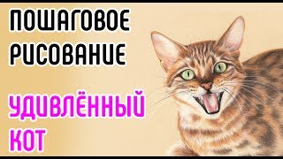 КОТ. Рисуем кота поэтапно. Пошаговое рисование животных. // How to draw Surprised cat step by step.