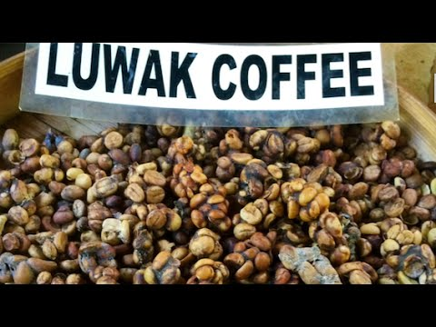 der teuerste kaffee der welt kopi luwak youtube. Black Bedroom Furniture Sets. Home Design Ideas