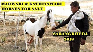 बिकाऊ मरवारी और कठियावरी बछेरे || MARWARI KATHIYAWARI FOALS for Sale