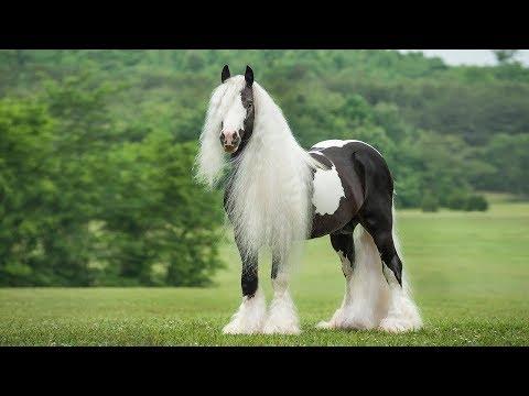 Dünyanın ən qeyri-adi at cinsləri