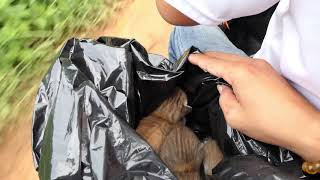 Rescue abandoned kittens in black plastic bag near  the road and adopted them