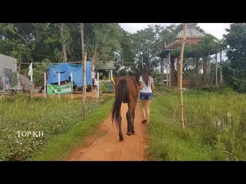 Horses feed grass