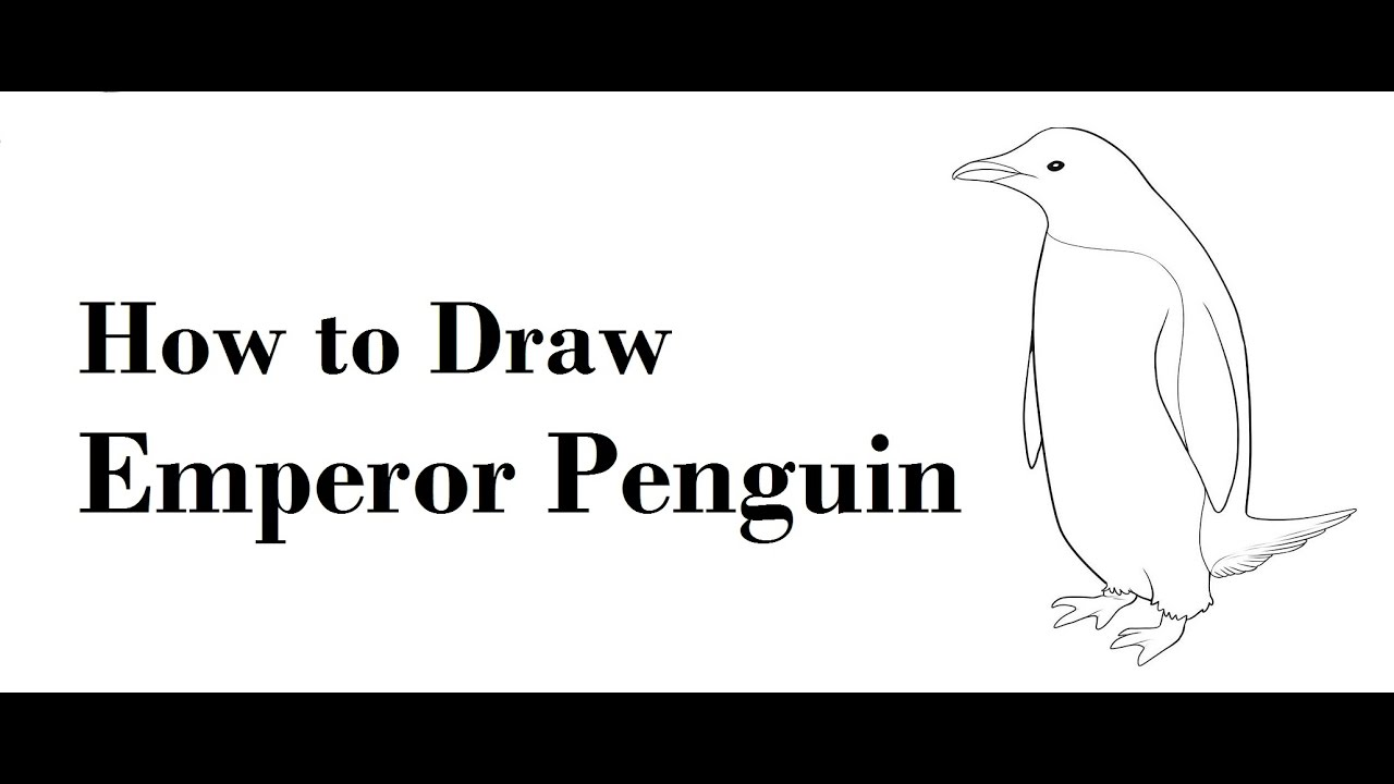 how to draw emperor penguin pencil drawing step by step