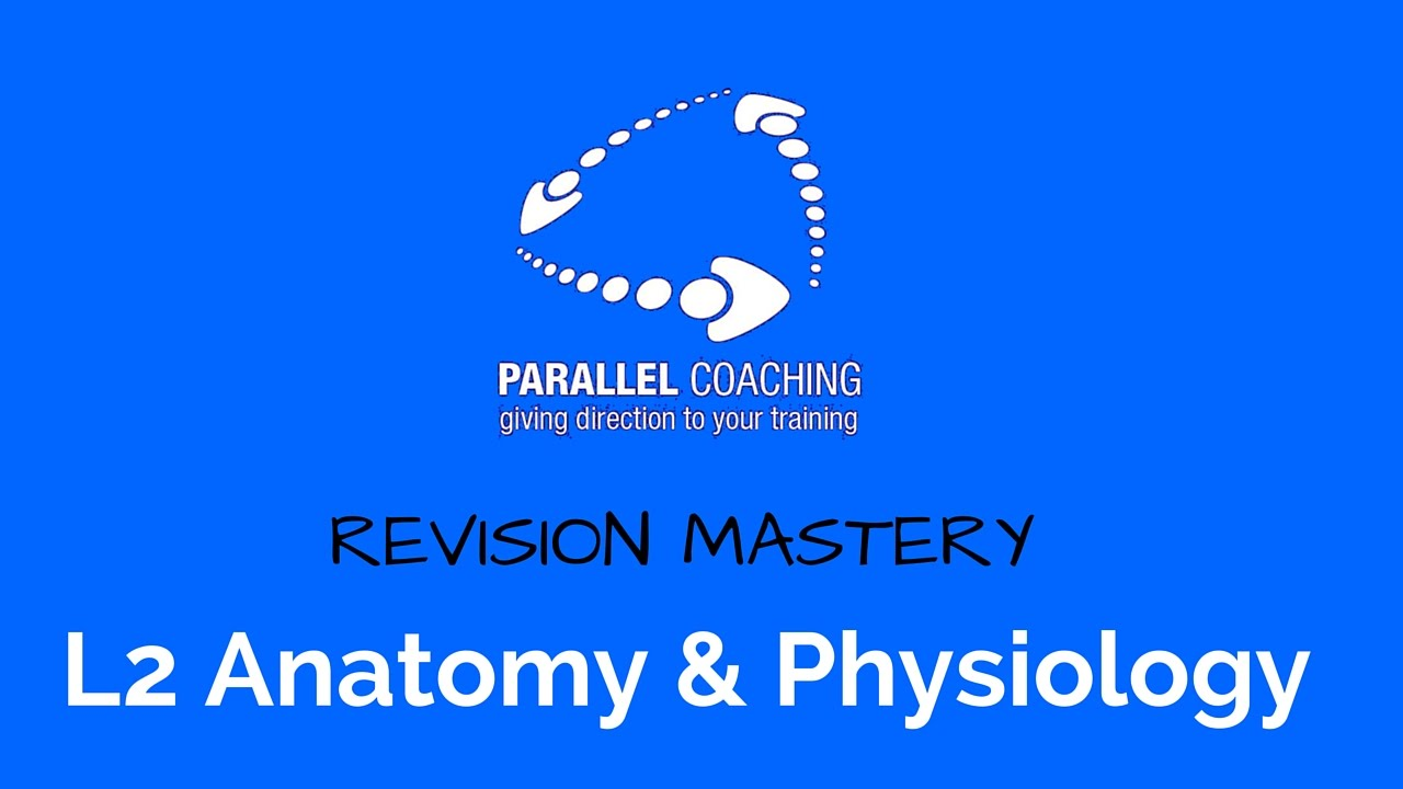 Level 2 Anatomy and Physiology Exam Revision - YouTube