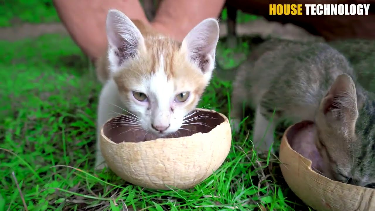Rescue Cats And Build Mud House Cat With Donald Trump Waterfall And Fish Pond