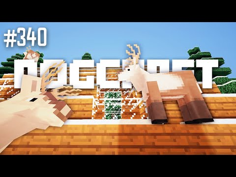 Up on the Wooftop | Dogcraft (Ep.340)